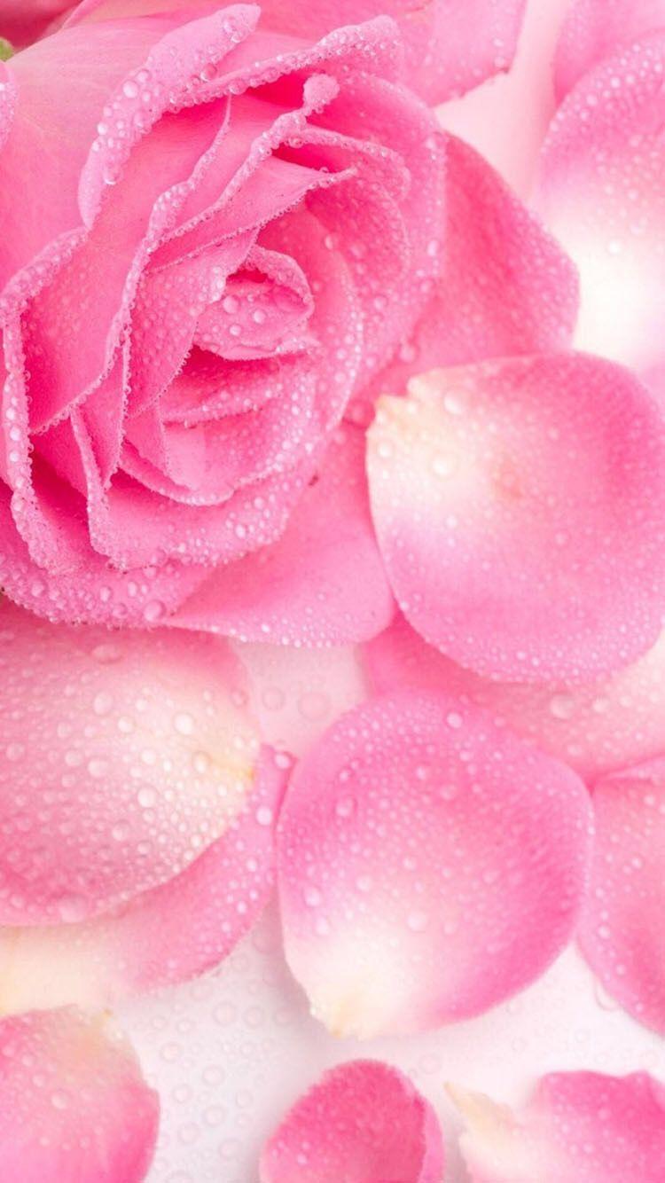 Pin De Lisa Borba Em Roses Rosas
