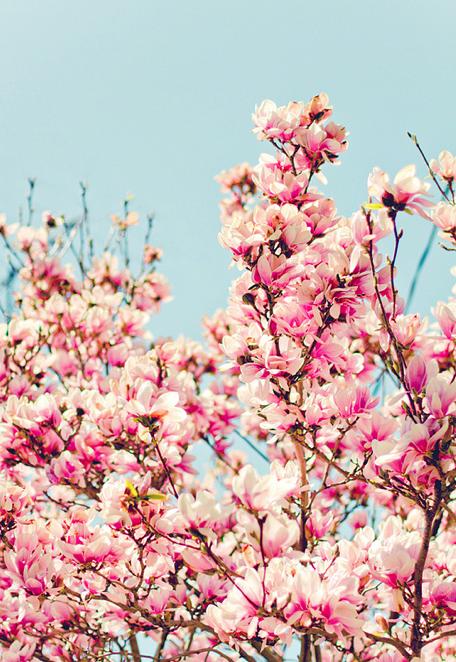 Springtime Spring Forward Blumen Fruhling Hintergrunde