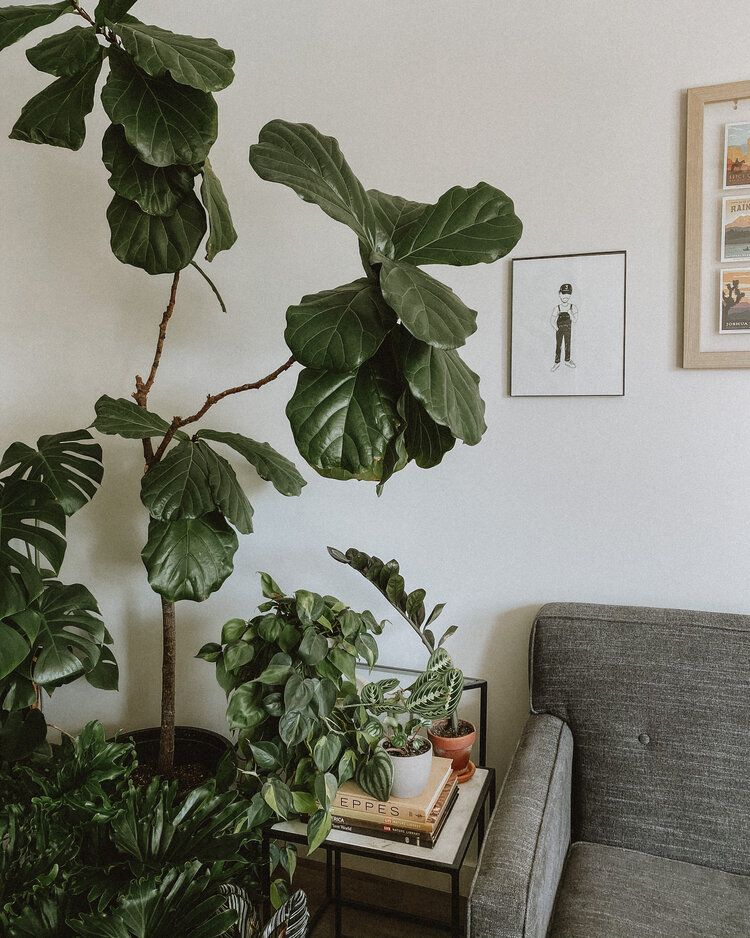 how to fix root rot monstera