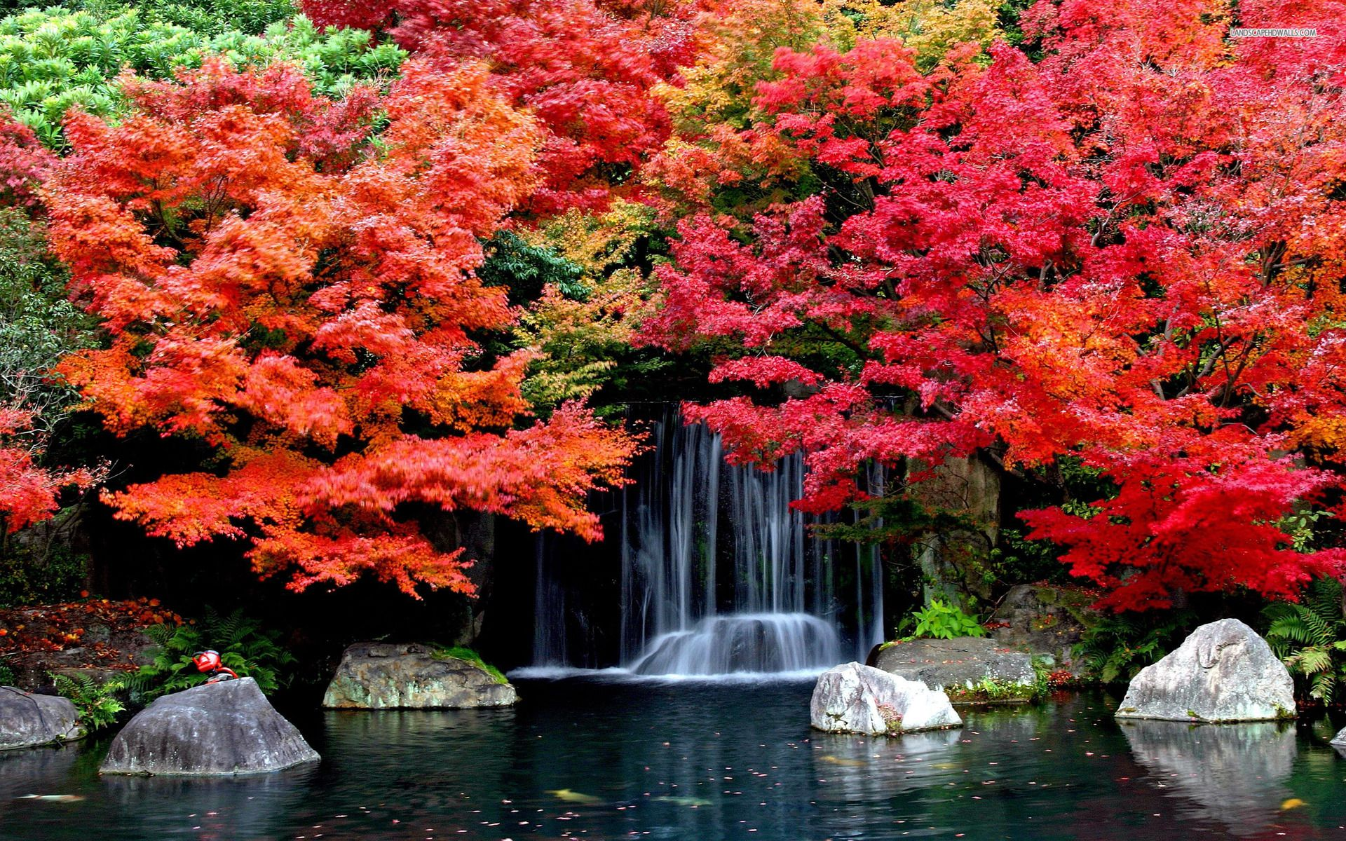 Colorful trees in the autumn wallpaper # | Location Ideas ...