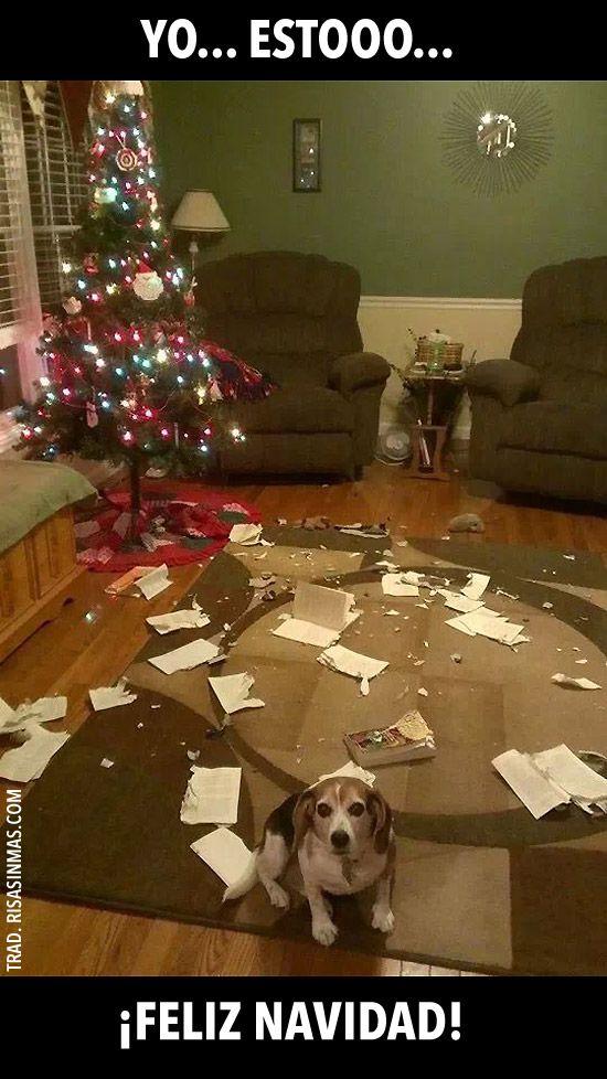 Yo Estooo Feliz Navidad Funny Animal Pictures Funny Merry Christmas Memes Funny Dog Memes