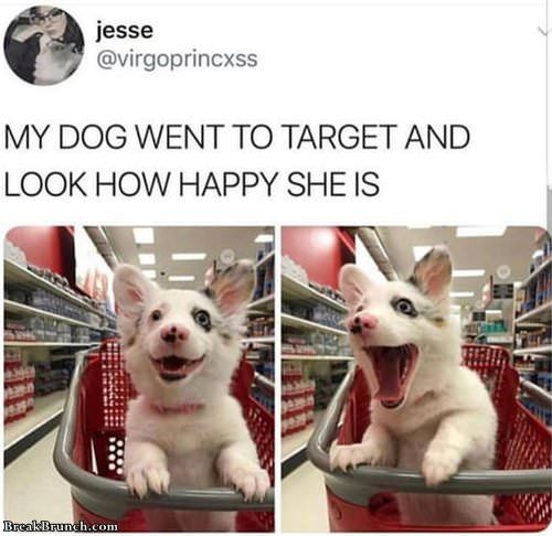 Happy Dog In Target Loldog Funnypicture Visit Breakbrunch Com For More Cute Baby Animals Cute Animals Cute Animal Memes