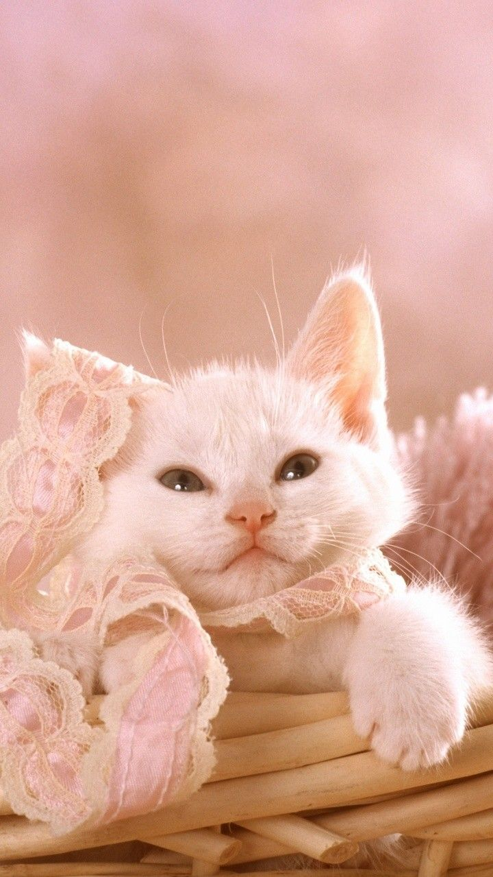 Pin By Rasir Veronique On Cute Kittens Baby Cats Cute Cats Kittens Cutest