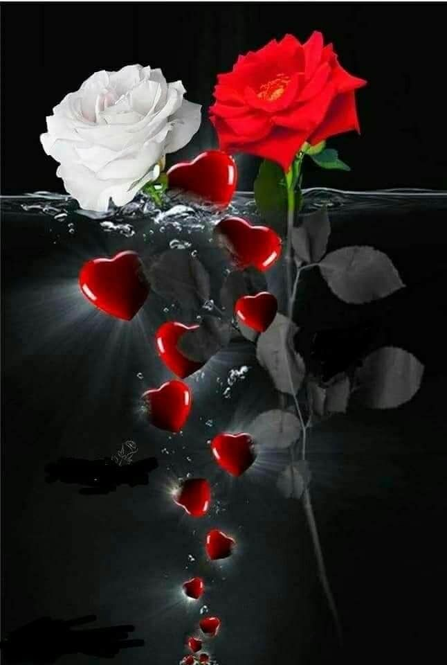 Pin By Joey On Special Pics Rose Flower Wallpaper Very Beautiful Flowers Red Roses Wallpaper