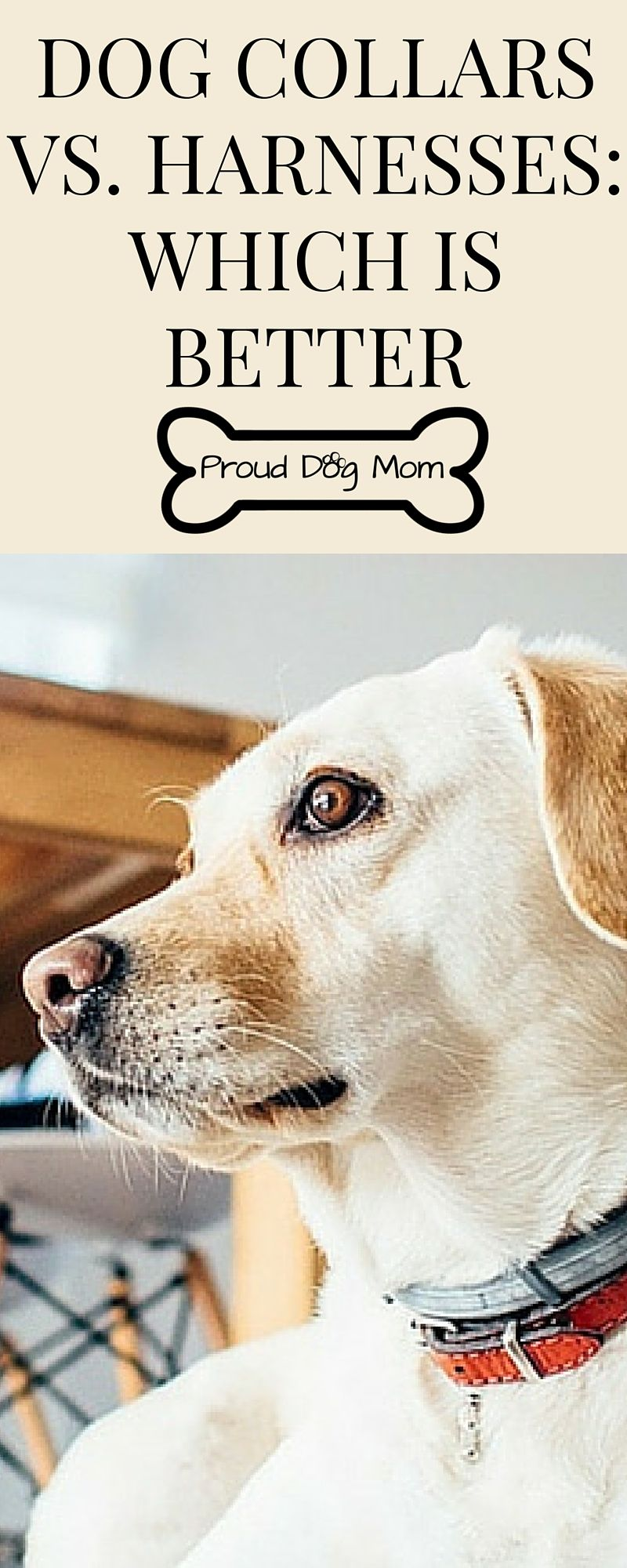 Dog Collars Vs Harnesses Which Is Better Dog Care Dogs Dog