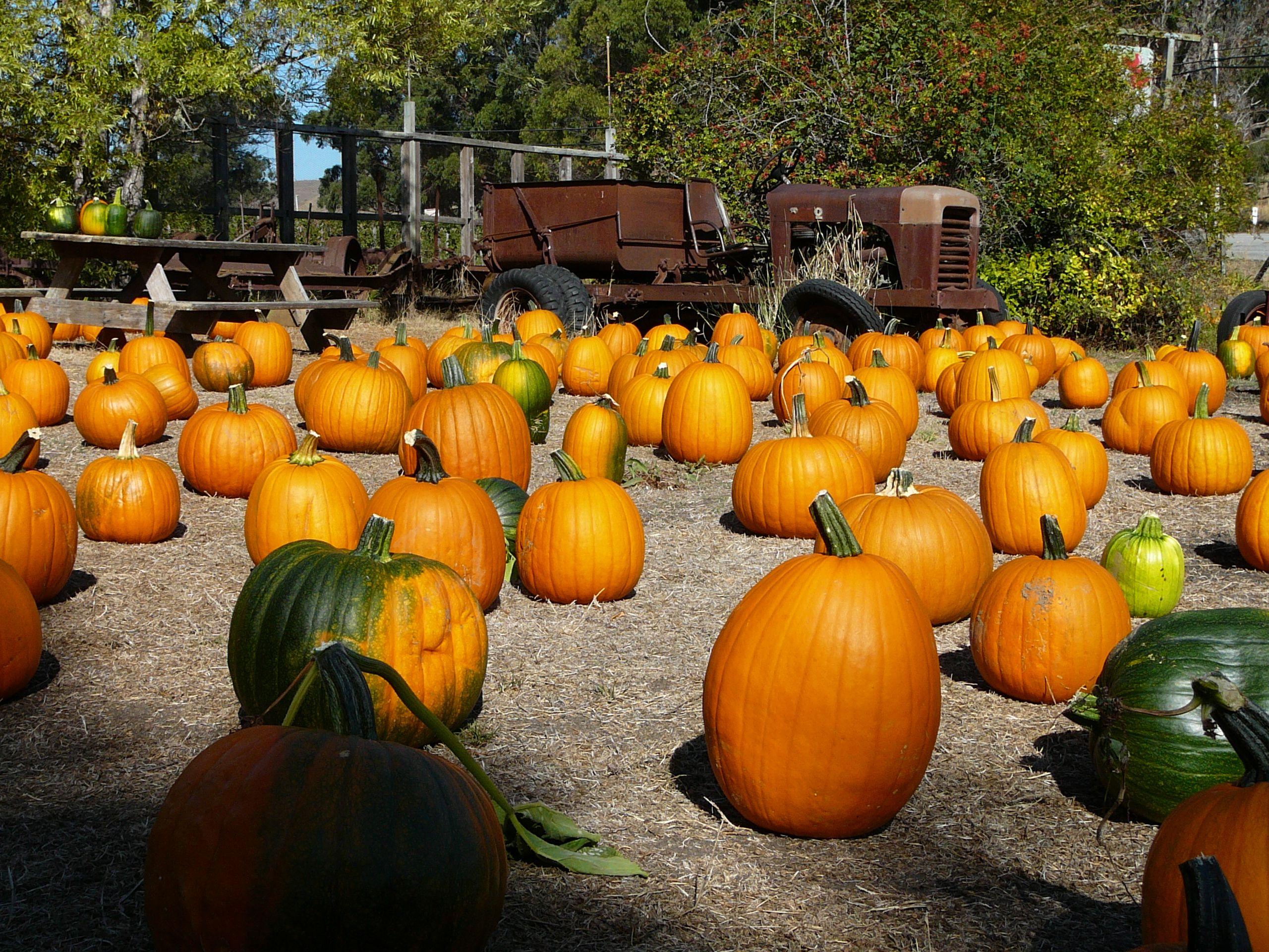 Pescadero Pumpkins