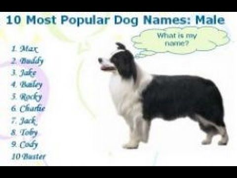 Female Dog Names Female Dog Names After Guns Female Dog Names A Z