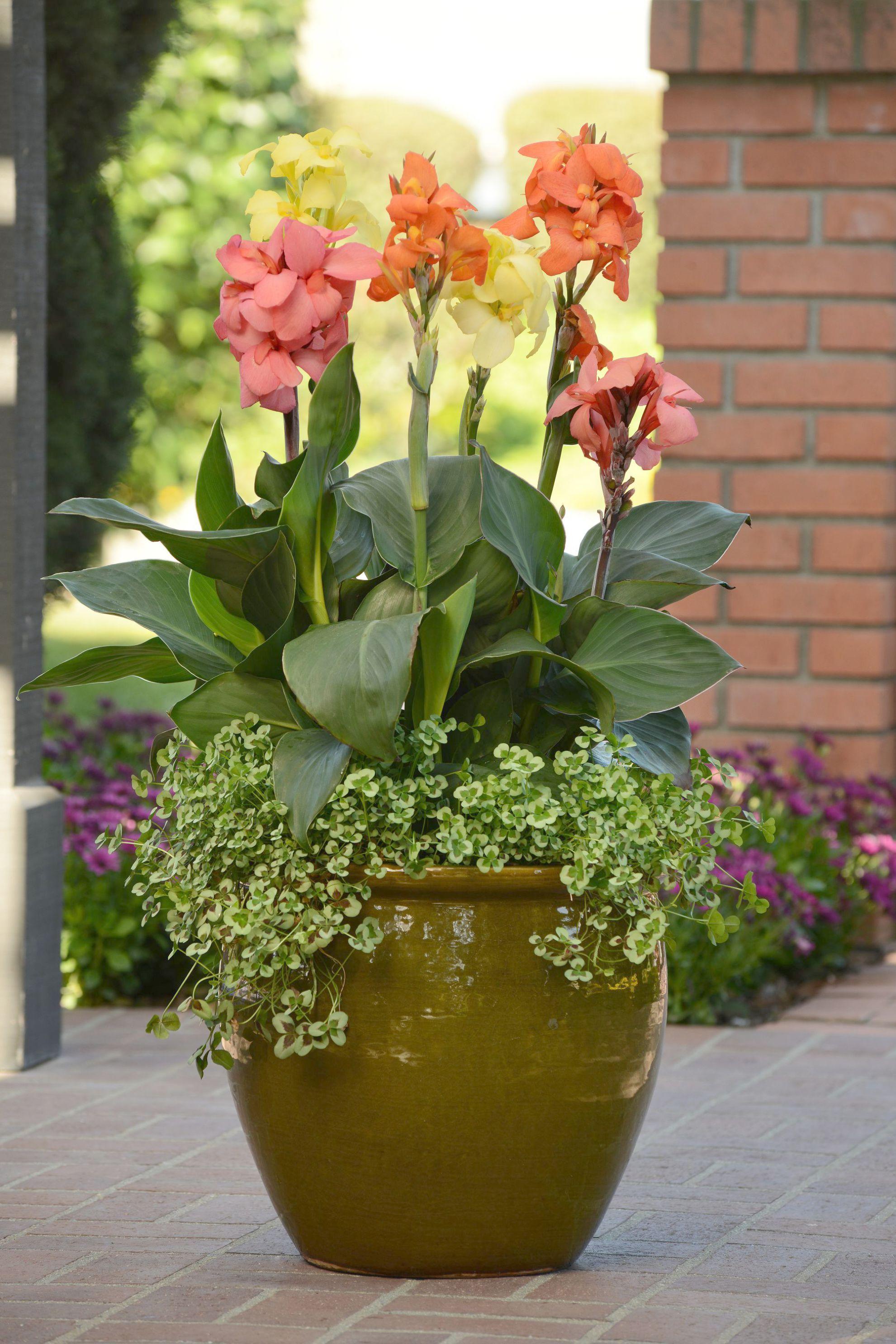Gardening Zones North America Through Gardening Leave Meaning In Hindi Gardening Gift Ideas Onl Container Gardening Flower Landscape Container Gardening Books