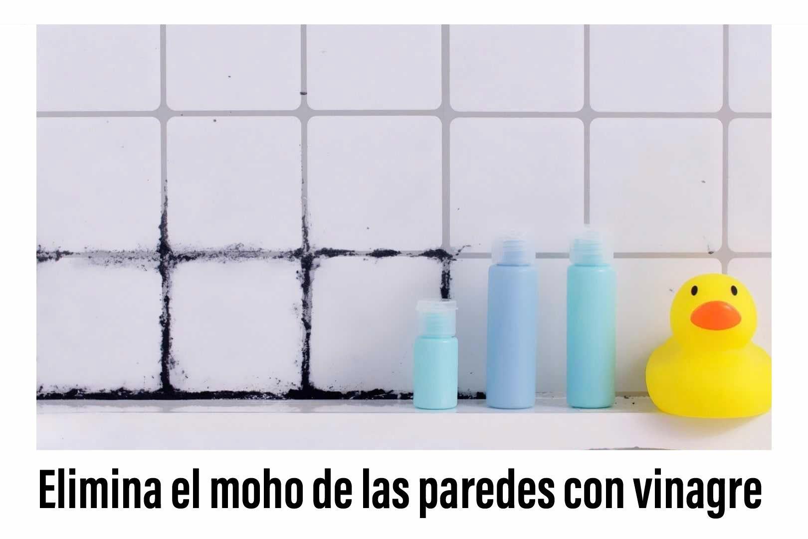 Limpieza en 2020   Limpiar moho, Limpieza, Escobilla de baño