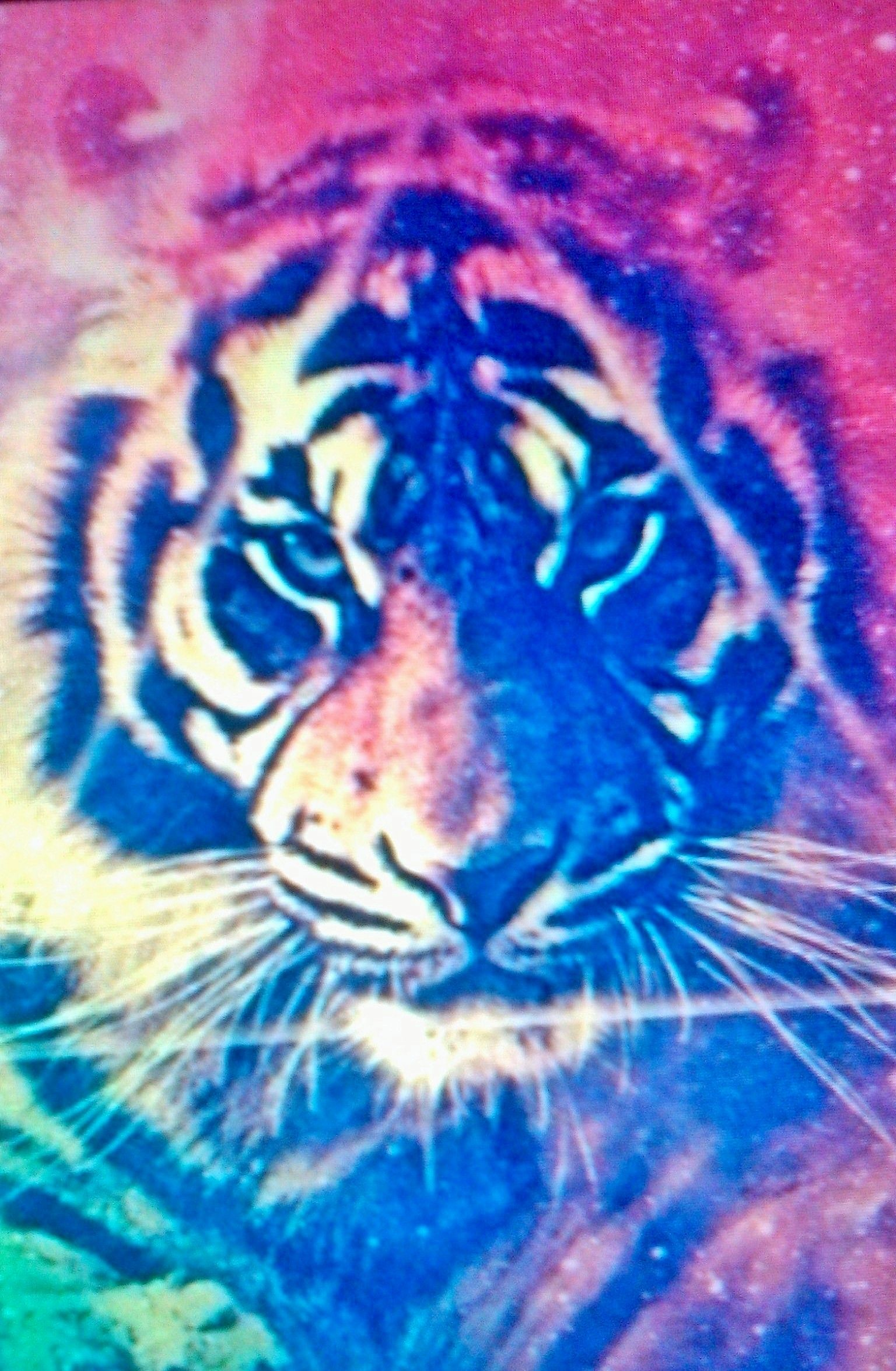multicolored tiger design pinterest