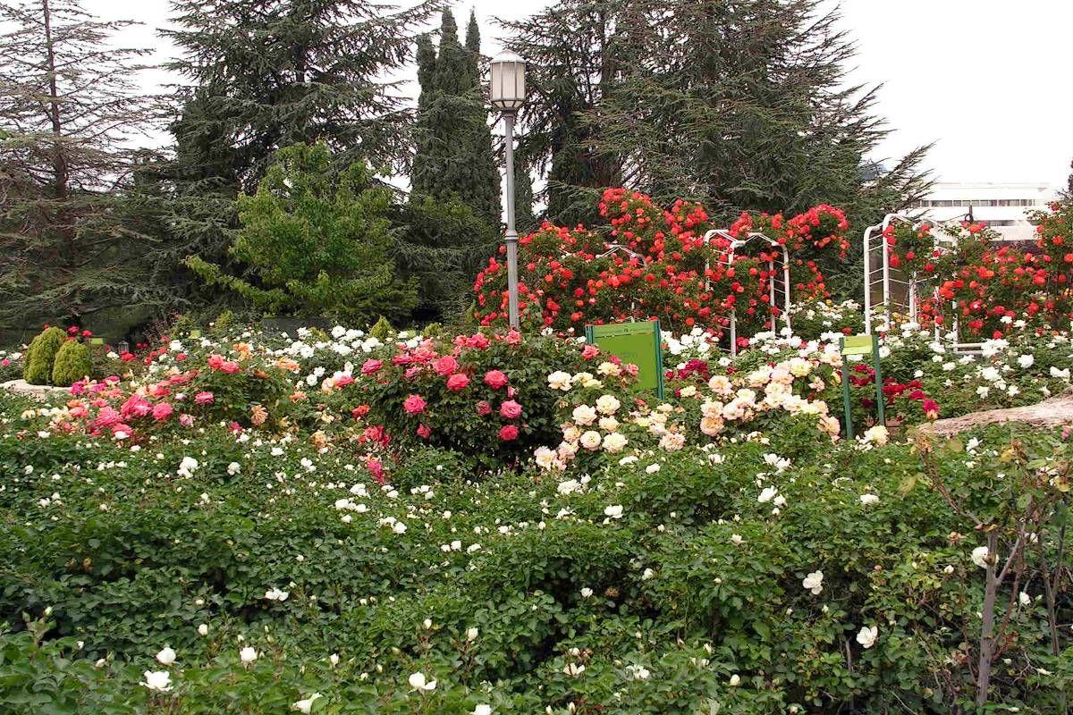 Wohl Rose Park Jerusalem Most Romantic Places Romantic Places Most Romantic