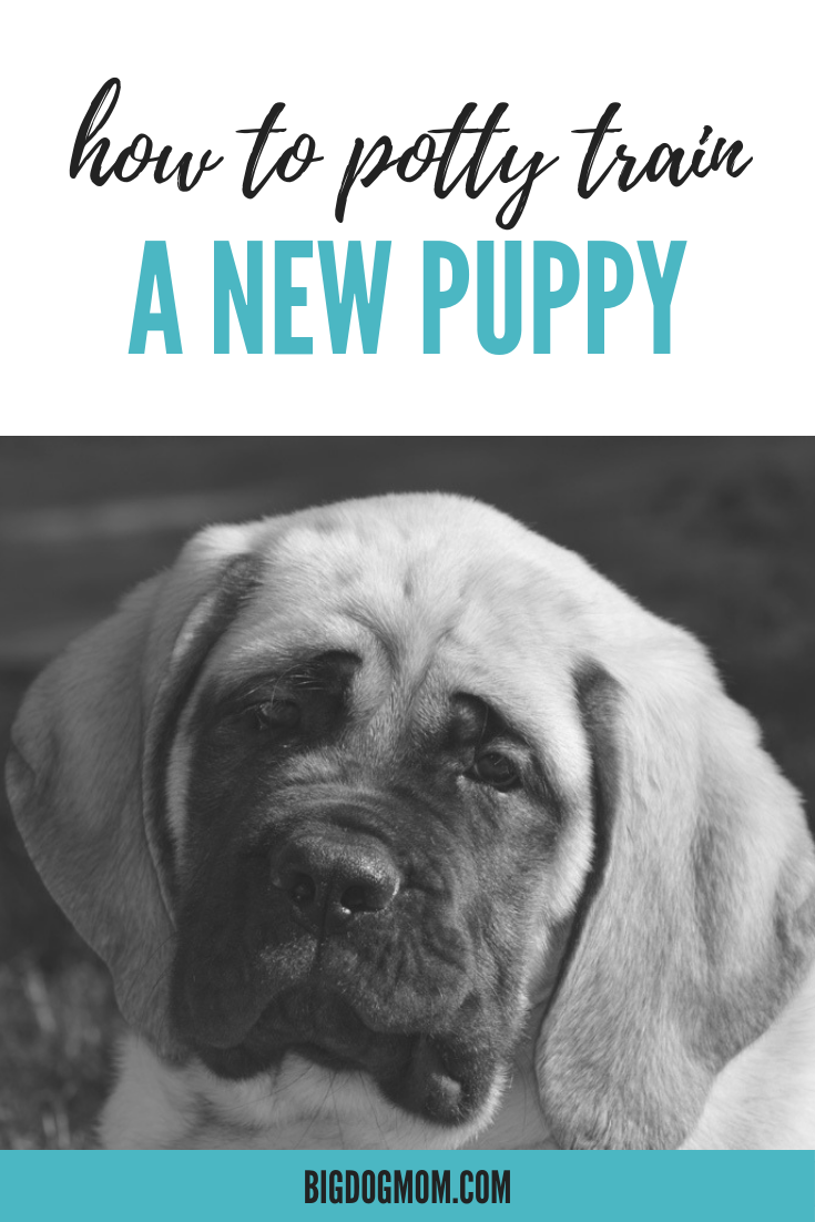 Potty Training A Puppy? 5 FailSafe Tips For A PeeFree