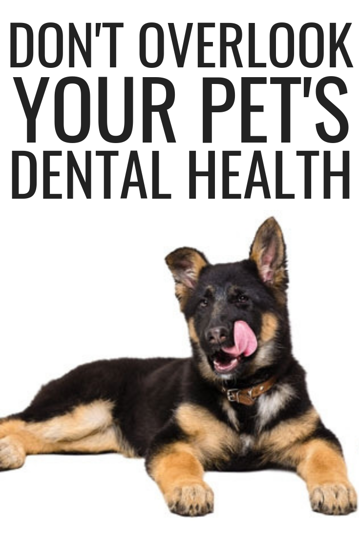 Don T Overlook Your Pet S Dental Health Dog Agression Training