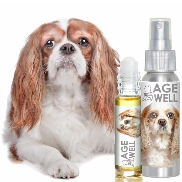 essential oil blends a dog a pet dogs a age well cavalier king charles spaniel aromatherapy for your senior cavalier s support