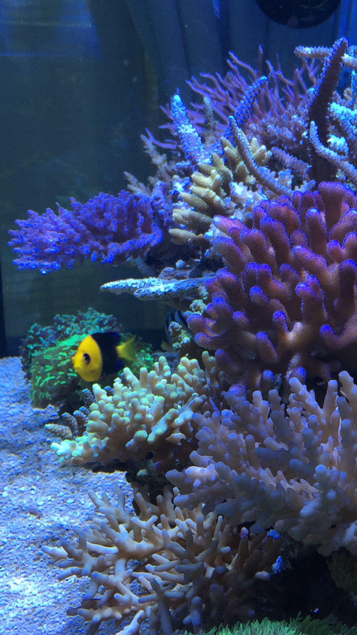 Pin by Hiroshi on reef aquarium Pinterest
