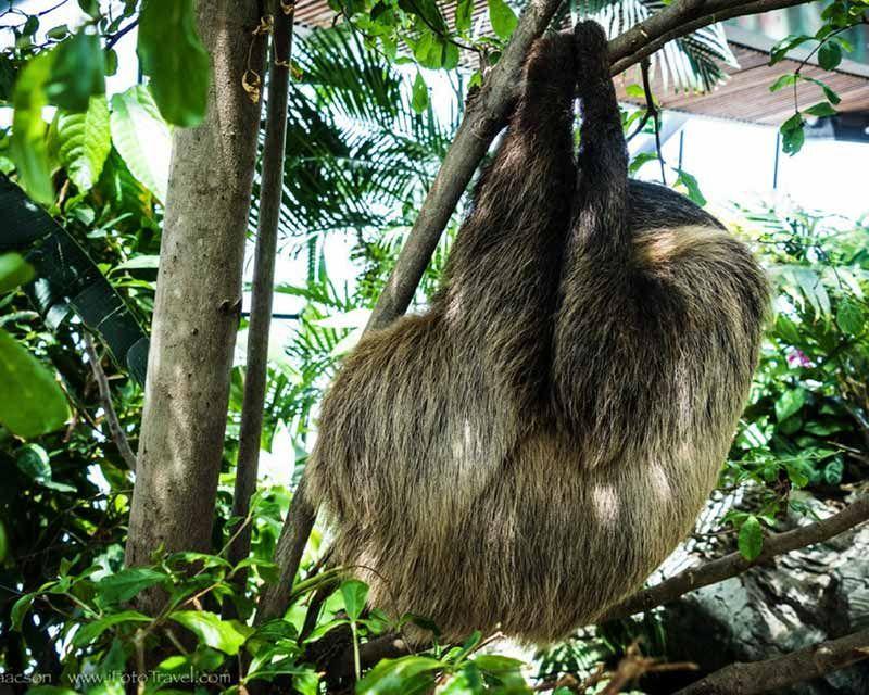 Green Planet Dubai Dubai Biodome Tropical Rainforest