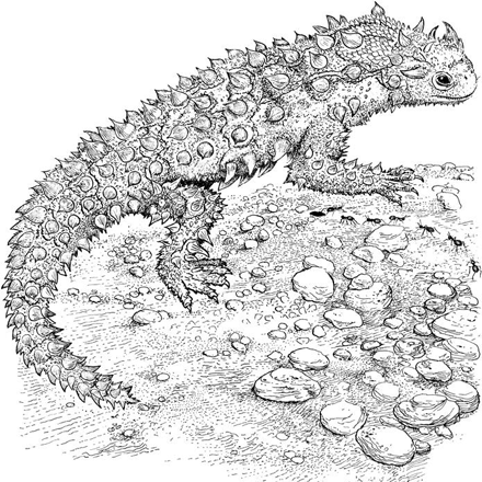 Reptile Coloring Pages By Yuckles Coloring Pages Animal Coloring Pages Horned Lizard