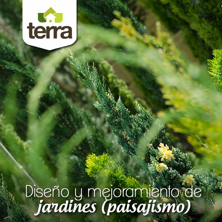 Para el diseño de #jardines o #paisajismo, elegir las plantas que combinen con otras es toda una ciencia. Los pinos enanos son árboles idóneos para esta tarea, ya que por su tamaño y gran versatilidad permiten con facilidad hacerlos parte de un proyecto.