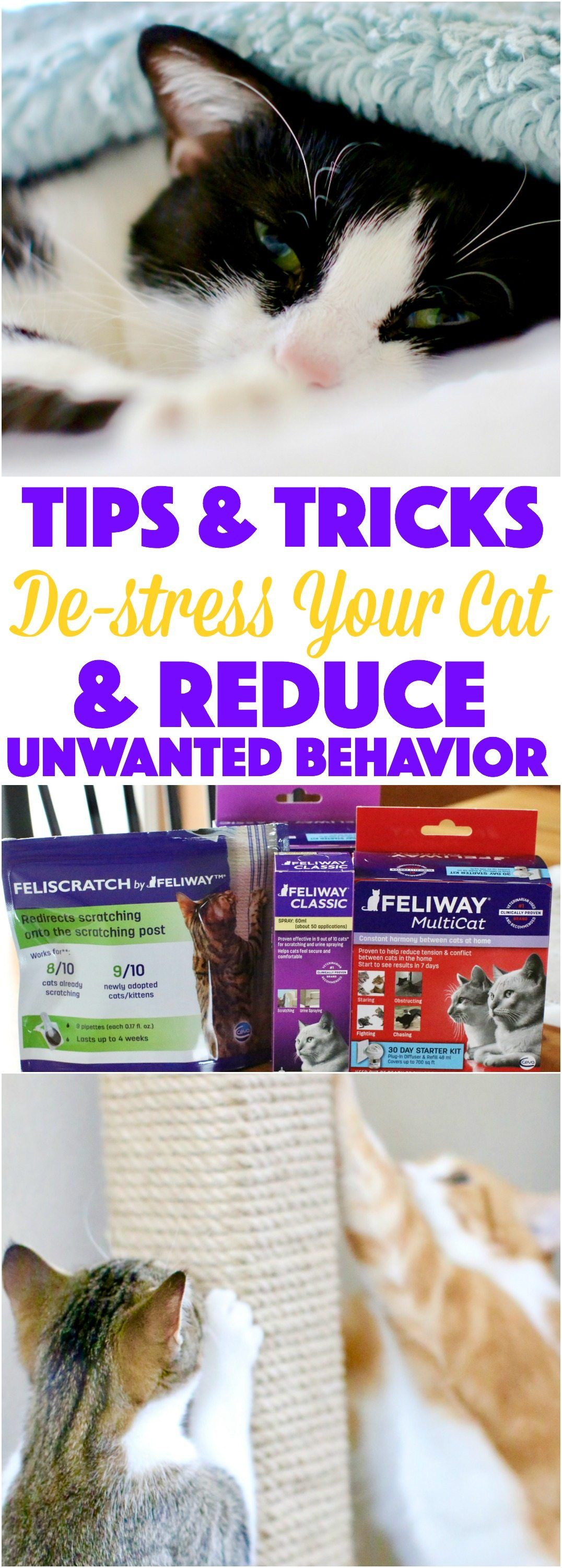 Tips and Tricks to De stress Your Cat and Reduce Unwanted Behavior