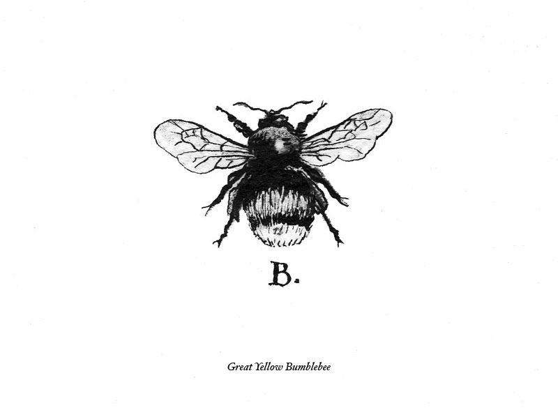 55fd324f Great Yellow Bumble Bee. Like this as a tattoo, maybe. | BeeByMe ...