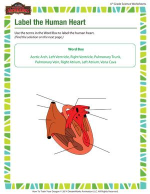 Label the Human Heart - Printable 6th Grade Science Worksheet for ...