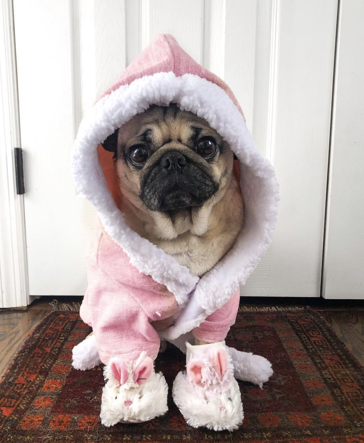 Pin By Shannon Fowler On The Pug Life Pugs Cute Cats Fashion
