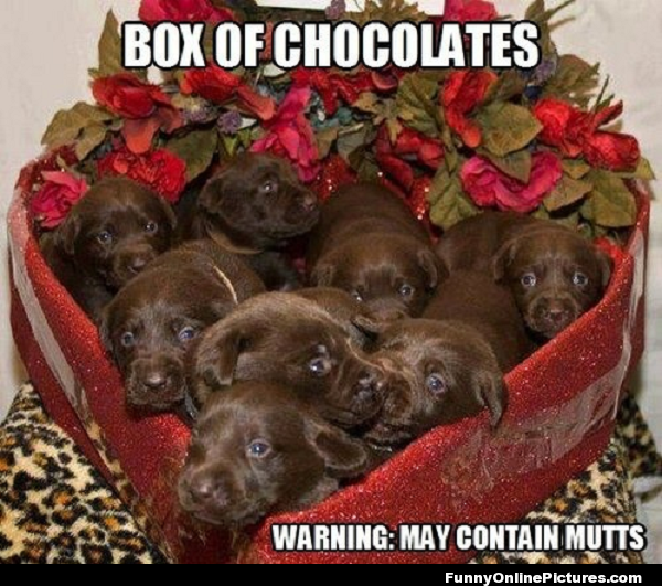 Box Of Mutts Lol See More Www Funnyonlinepictures Com