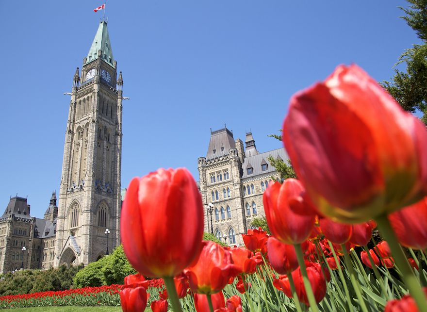 canadiantulipfest