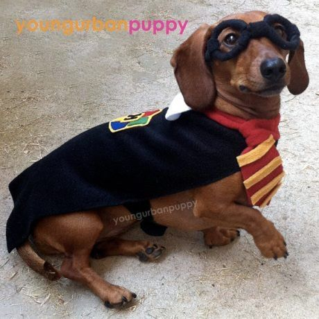 Harry Potter Costume For Dachshund Lol Robin Patterson And