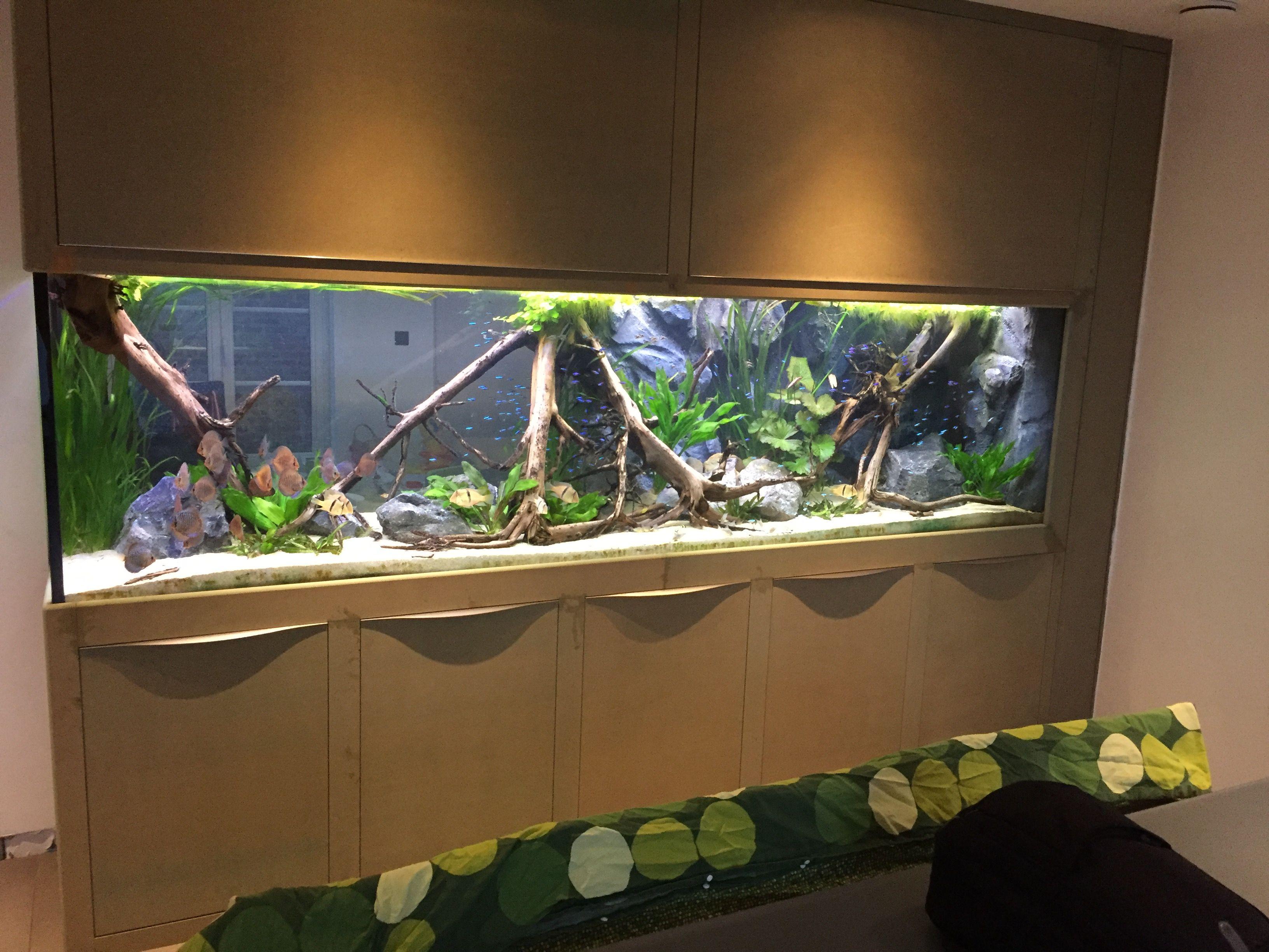 Discus aquarium 2200 liter fish tankes Pinterest