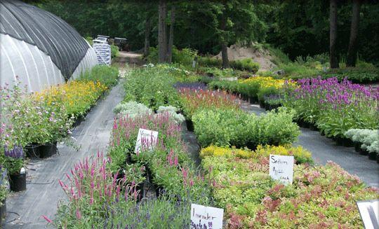 New Hampshire perennials | Shade plants, Shade garden ...