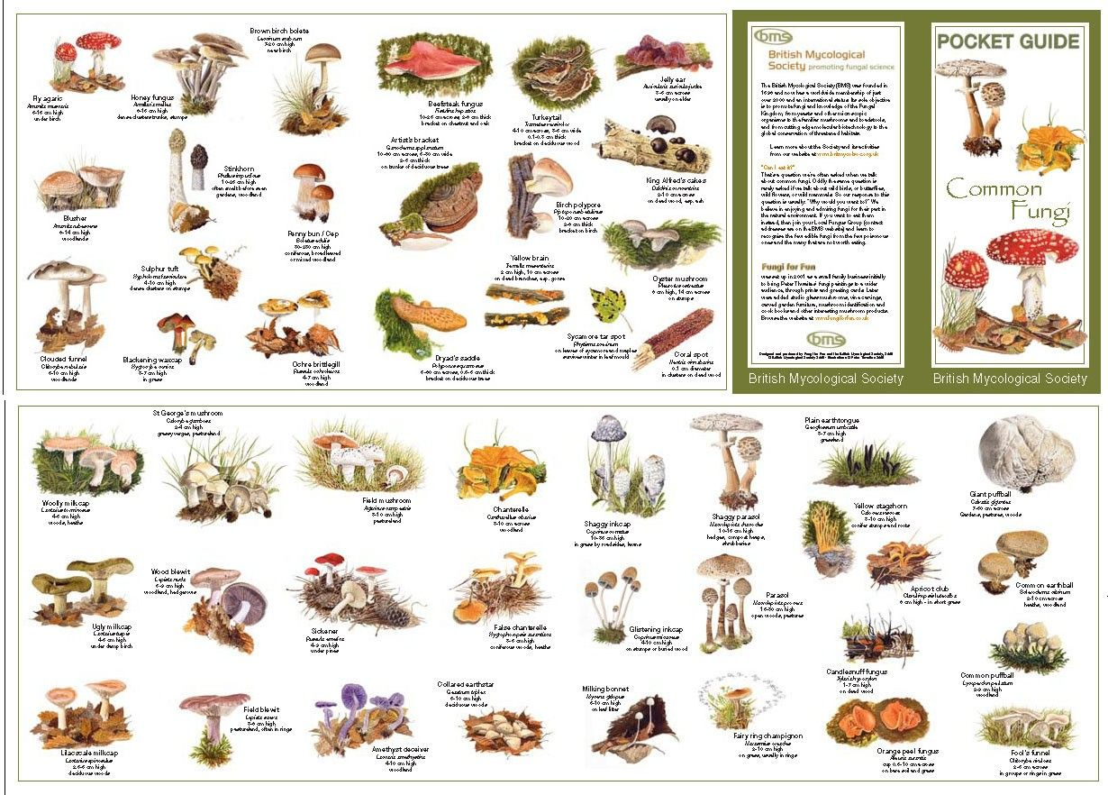 The pocket guide to common fungi really is  sized leaflet which also pin by sebastian michaelis on traveling camping  road trip guides rh pinterest