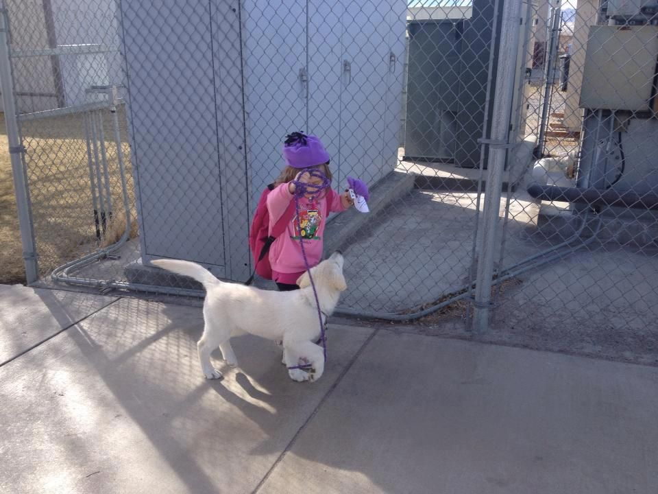 Park Art My WordPress Blog_Rocky Mount Animal Shelter Facebook