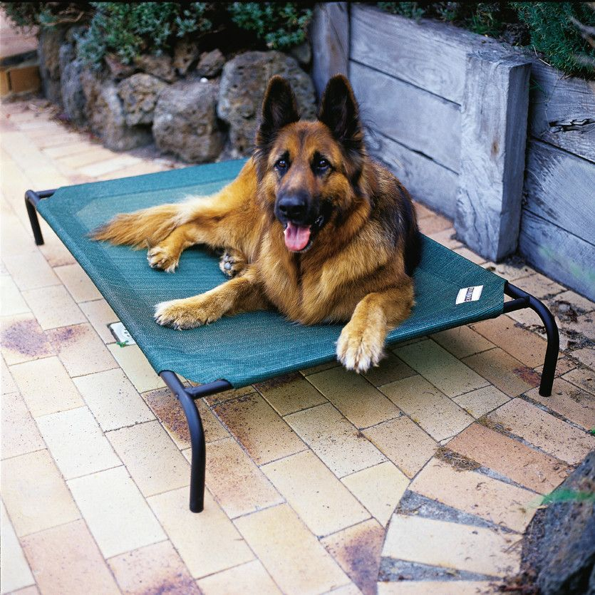New Coolaroo Elevated Pet Bed