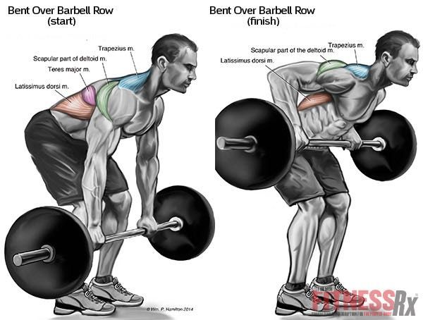 Thicken Your Upper and Middle Back - with Bent Over Barbell Rows ...