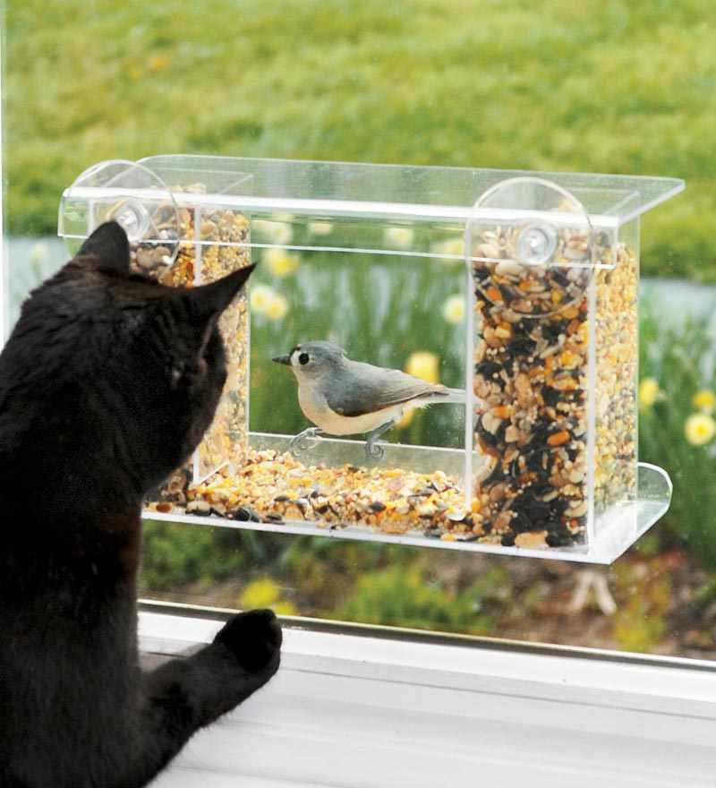 Awesome Bird Feeder for Balcony