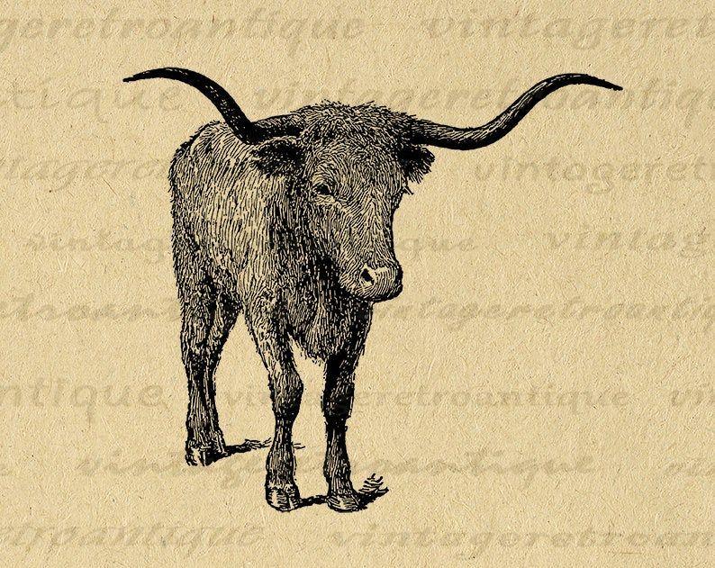 11x14 Texas Longhorn Bull Printable Graphic Download Steer Digital Cow Image Vintage Cow Bull Clip Art For Tran Clip Art Vintage Antique Artwork Vintage Images