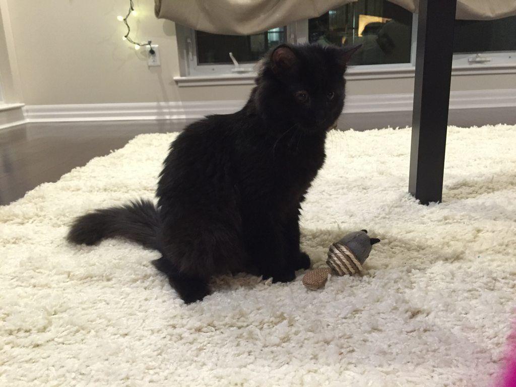 Meet my new kitty Luna!