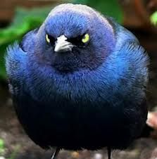 angry birds :)