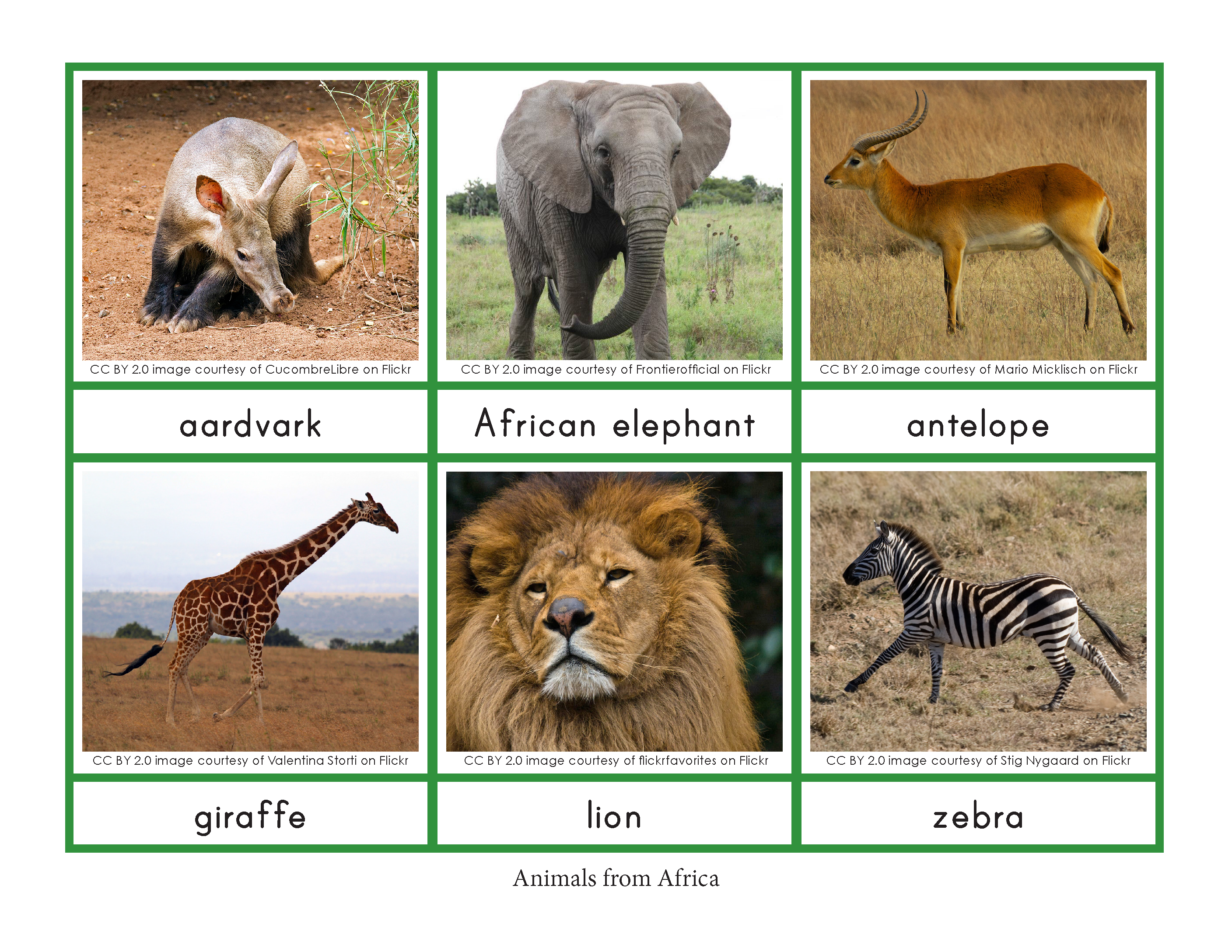 Montessori Animals And Their Continents Geography
