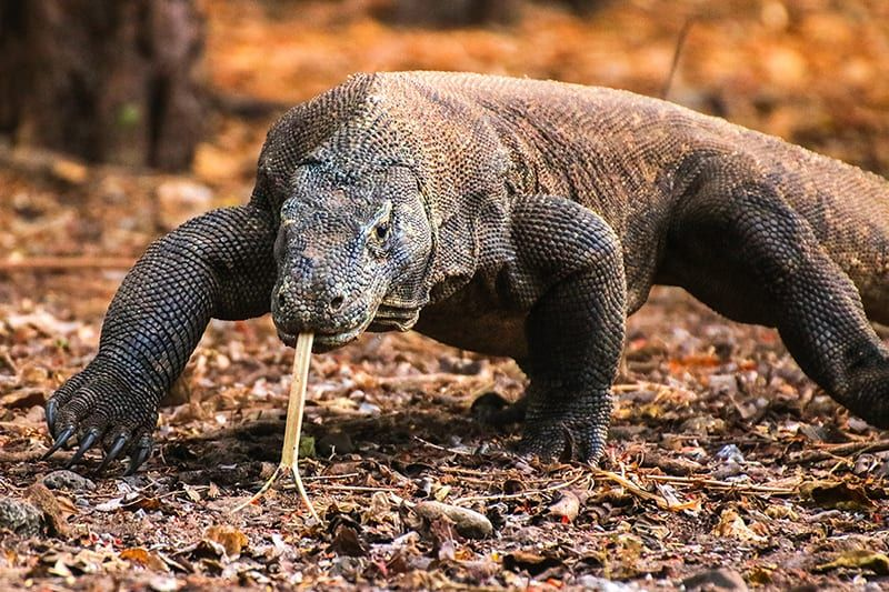 Indonesia's Jurassic Park and the land of the Komodo