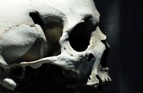 Pin de Josefine ♕ en tv: bones don\'t lie | Pinterest | Anatomía ...