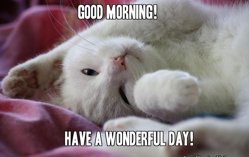 sweet good morning cat memes pictures
