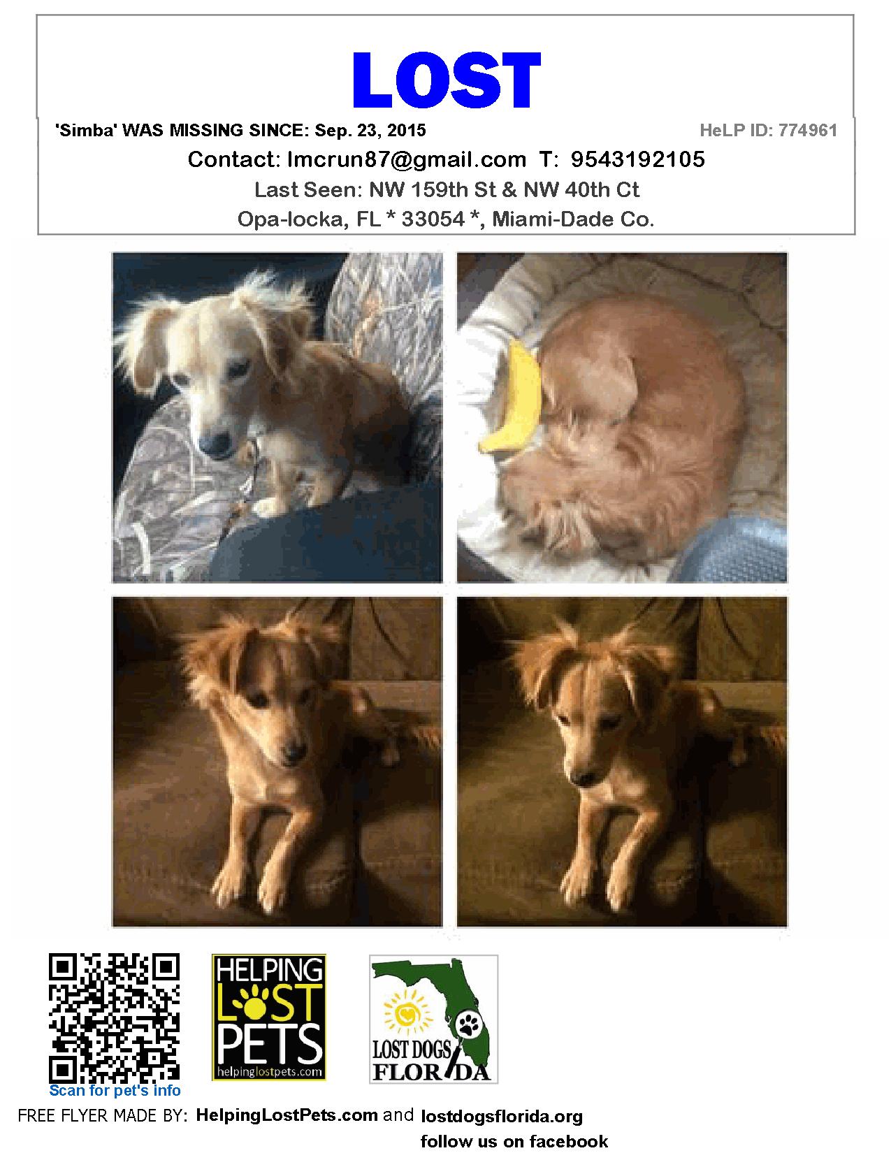 Lost Dog Mix Opa Locka Fl United States 33054 Losing A Dog Free Puppies Dog Mixes