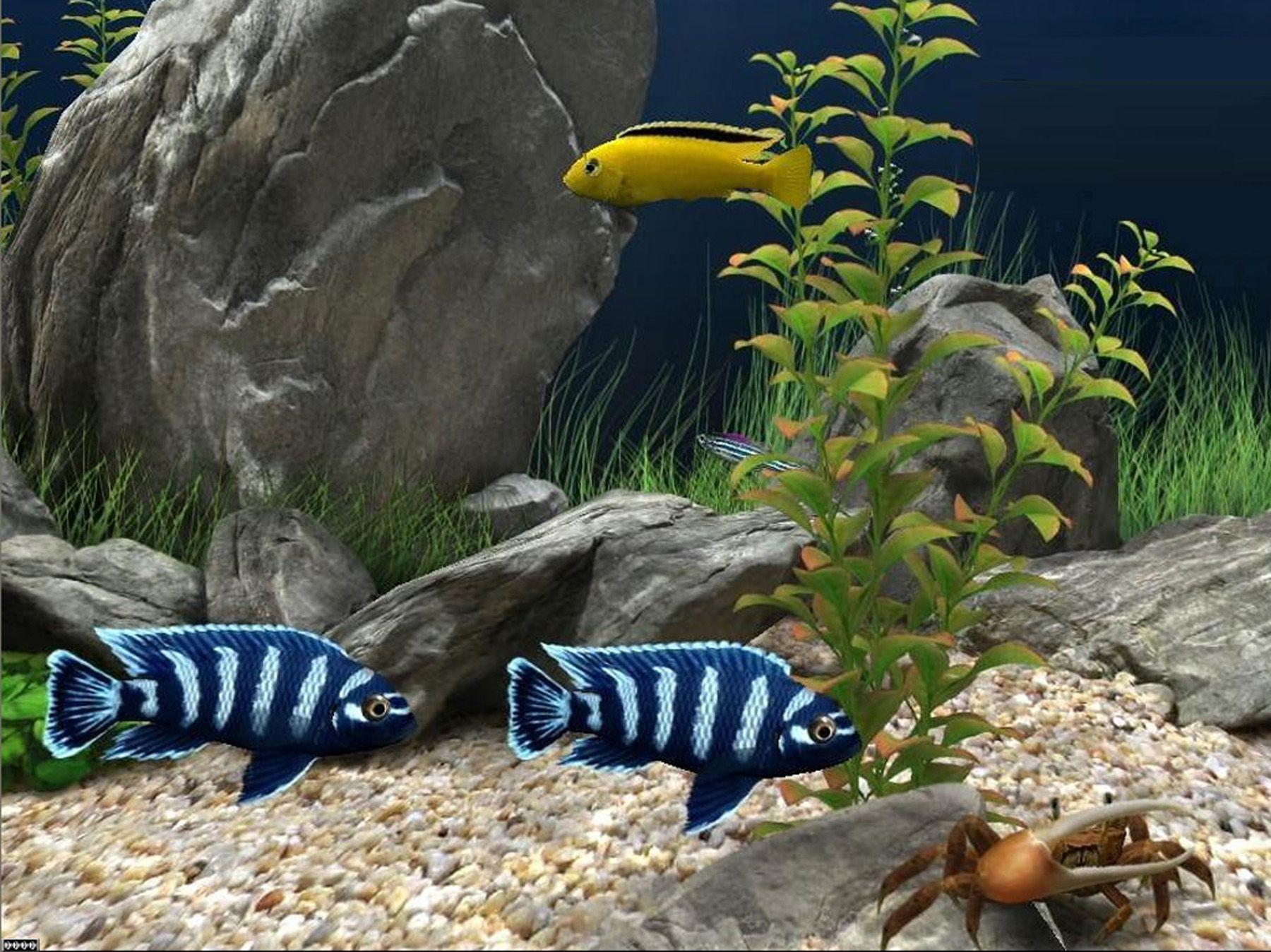 0d1eafc79cbed65859315a8120b155b6 Frais De Aquarium Tropical Schème