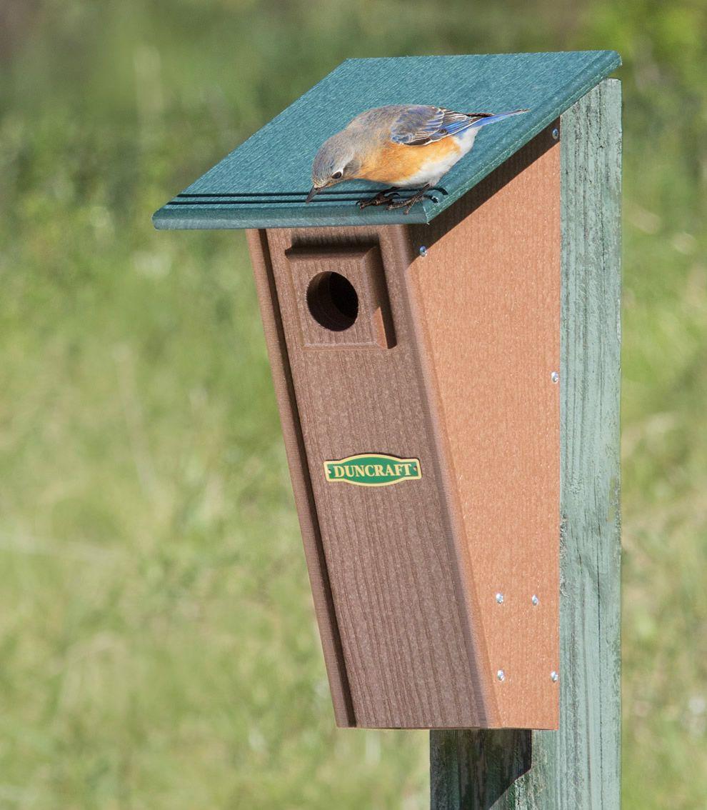 BirdSafe® Peterson Eco Bluebird House Bluebird house