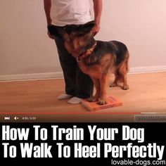 How To Train Your Dog To Heel Perfectly Dog Training Obedience