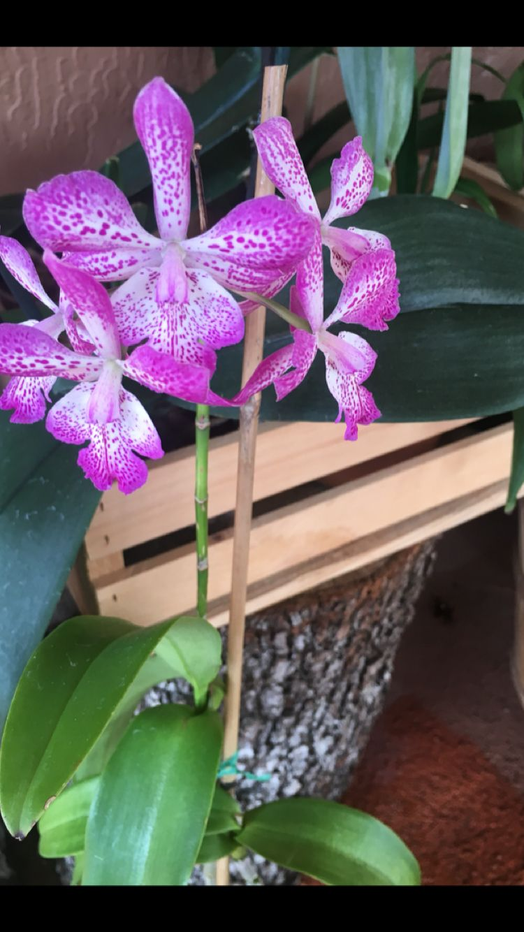 Pin by susana vilorio on my orchids pinterest orchid