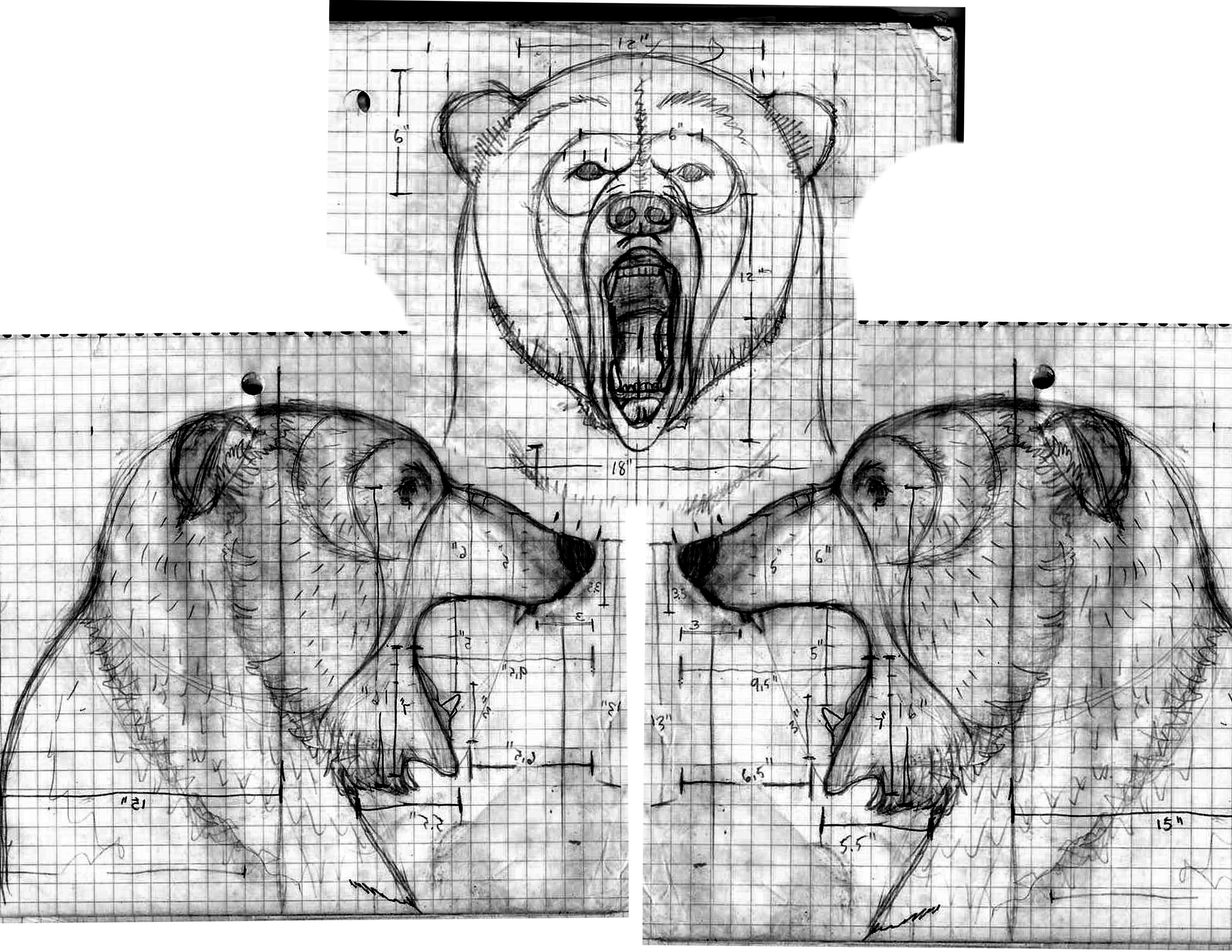 how to draw grizzly bears step by step forest animals animals