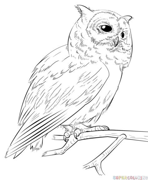 how to draw a realistic owl step by step drawing tutorials for kids and beginners